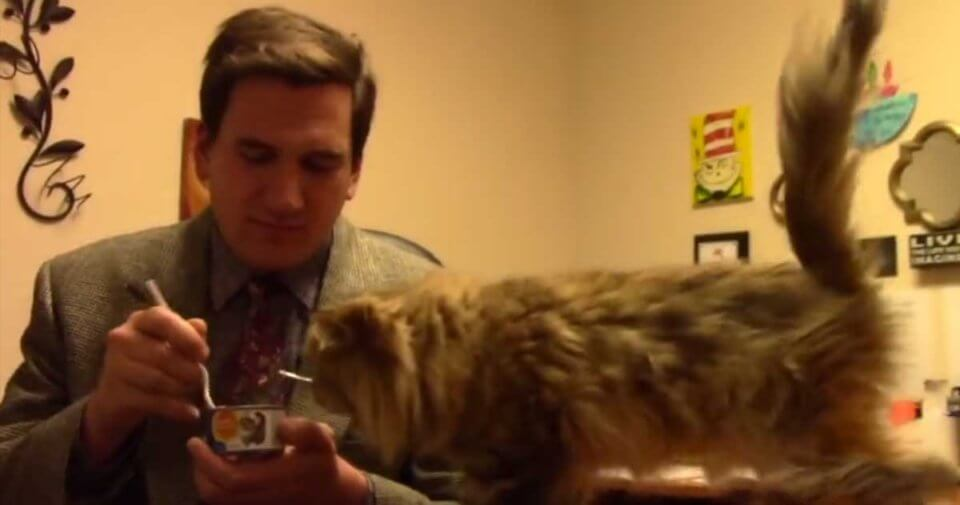 Animal Shelter Tries To Make Hilarious Low-Budget Cat Commercial