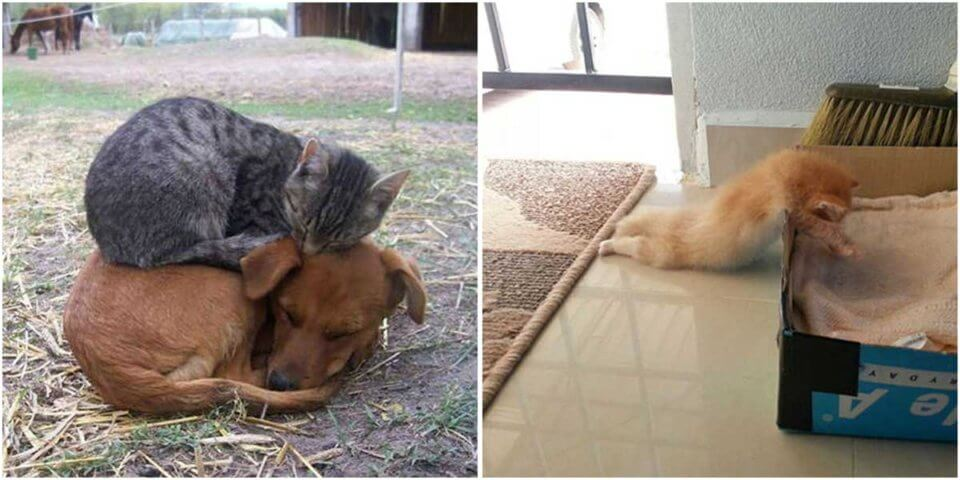 30 Pics Show You That Cats Can Sleep Anywhere And Anytime
